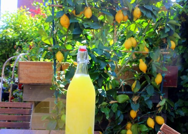 Zelfgemaakte limoncello